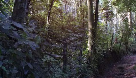 AMZ Pathfinder (re)introduction